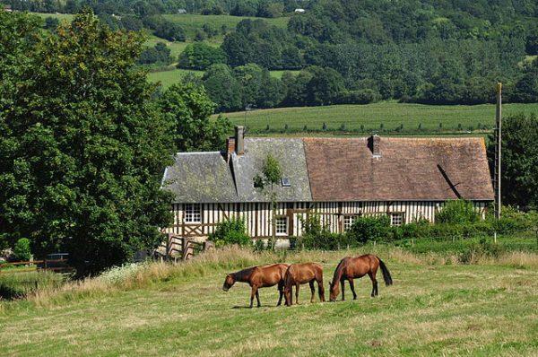Town of Calvados